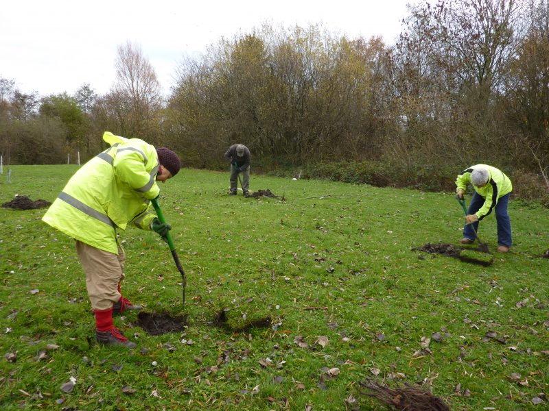 Planting fruit trees in the Community orchard.
