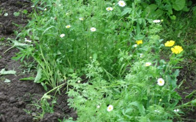 2015- July- More digging and planting wildlife flower seeds.