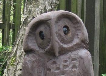 2016 -May-New Owl in the Wildlife Garden.