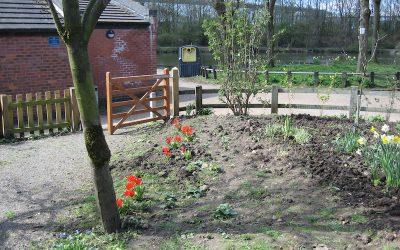 2016 – April – A little colour in the garden.