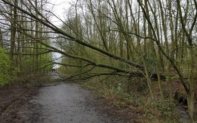 2017 – February Gales bring down trees around the site.